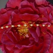 15-Perlenarmbaender-tuerkis-rot-weiss-und-gold-glanz-mit-Elefaentchen-weiss-und-gold-glanz-rot-weiss-und-gold-glanz-farbig-fuer-den-Sommer