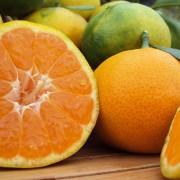 orangenpresse-vive-citrus-10