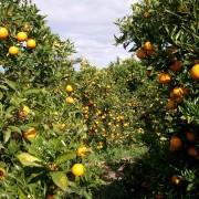 orangenpresse-vive-citrus-11
