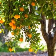 orangenpresse-vive-citrus-12
