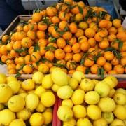 orangenpresse-vive-citrus-7