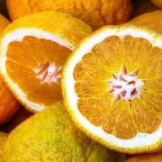 orangenpresse-vive-citrus-9