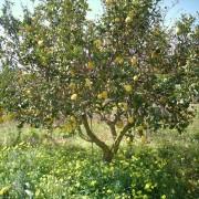zitronenpresse-vive-citrus-2