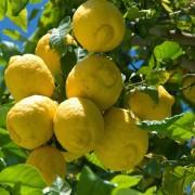 zitronenpresse-vive-citrus-3