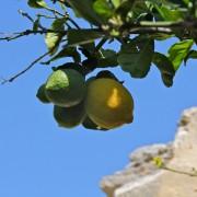zitronenpresse-vive-citrus-6
