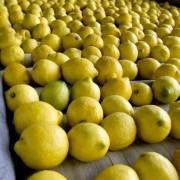 zitronenpresse-vive-citrus-8