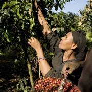 haessig-und-haessig-strawberry-candy-kaffee-aethiopien-18