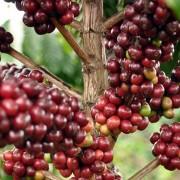 haessig-und-haessig-strawberry-candy-kaffee-aethiopien-37