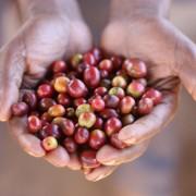 haessig-und-haessig-strawberry-candy-kaffee-aethiopien-42
