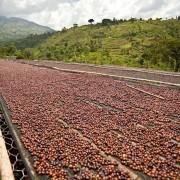 haessig-und-haessig-strawberry-candy-kaffee-aethiopien-55