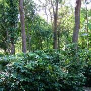 haessig-und-haessig-yeti-kaffee-bio-nepal-11