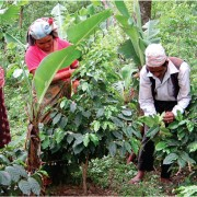 haessig-und-haessig-yeti-kaffee-bio-nepal-14