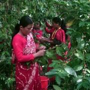 haessig-und-haessig-yeti-kaffee-bio-nepal-18