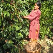 haessig-und-haessig-yeti-kaffee-bio-nepal-2