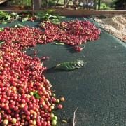 haessig-und-haessig-yeti-kaffee-bio-nepal-20