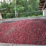 haessig-und-haessig-yeti-kaffee-bio-nepal-21