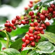haessig-und-haessig-yeti-kaffee-bio-nepal-22