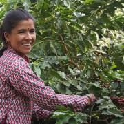 haessig-und-haessig-yeti-kaffee-bio-nepal-4