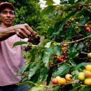 haessig-und-haessig-yeti-kaffee-bio-nepal-6