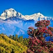 haessig-und-haessig-yety-kaffee-bio-aus-nepal-26